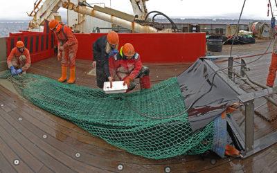 specimen recovery following net retrieval on RRS James Clark Ross