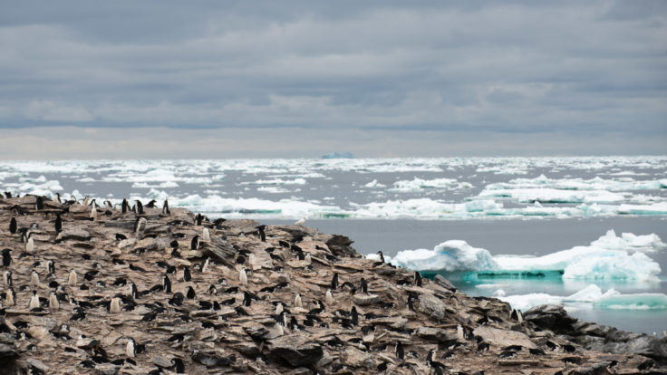 A rocky beach next to the ocean with lots of chinstrap penguins