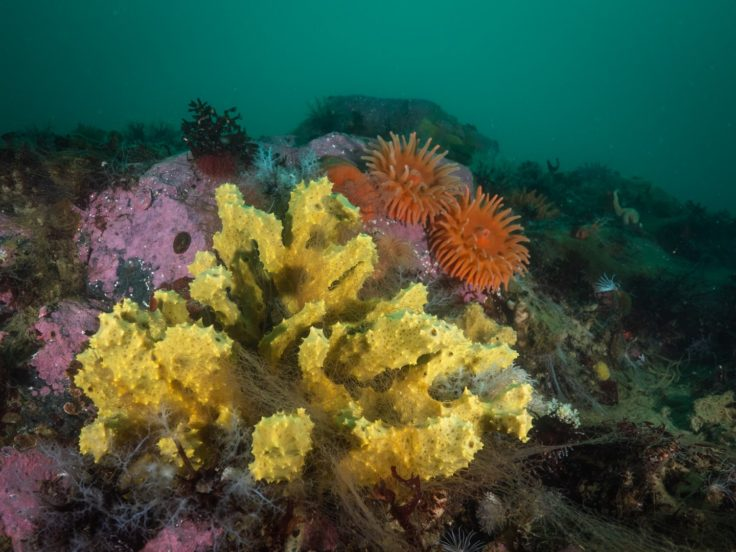 Underwater view of a coral