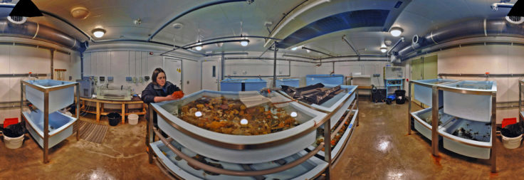The Bonner Laboratory aquarium at Rothera Research Station, Antarctica