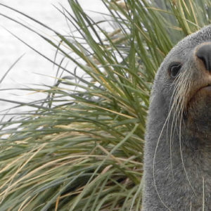 A close up of a seal.