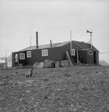 Main hut, Admiralty Bay Station, 1951. (Photographer: Roger Todd-White; Archives ref: AD6/19/2/G176)