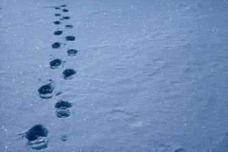 Footsteps in the snow.