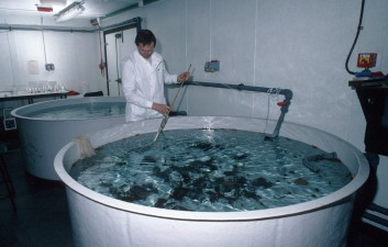 The aquarium at the Bonner Laboratory. Here marine animals (collected by divers) are held in running seawater, for either marine biological research or prior to transport back to the United Kingdom.