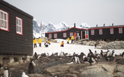 People walking into a building with penguins in the foreground