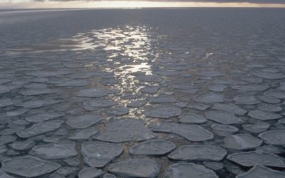 Pancake  ice to the horizon.  Pancake ice (predominantly circular pieces of ice from 30 cm - 3 m in diameter, and up to 10 cm in thickness)  can rapidly cover vast areas, the characteristic raised rims of the pancakes result from the pieces striking against one another. It may be formed on a slight swell from grease ice or slush.