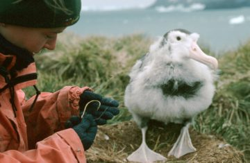 A person and a seabird