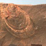 A close up of a desert.