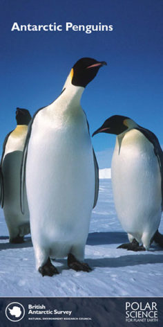 Public information leaflet_Antarctic Penguins_thumbnail