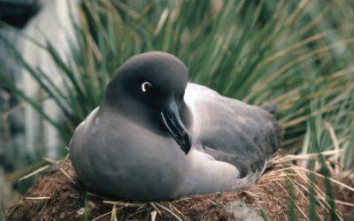 A bird sitting on grass.
