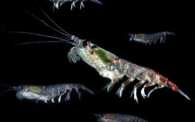 A close up of an animal.