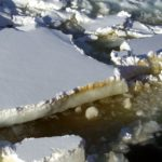 Algal layer in sea-ice