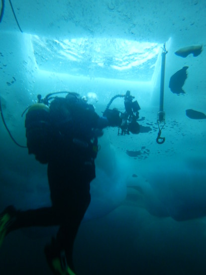 Surfacing under the sea ice after a photography dive on the settlement plates in Hangar Cove