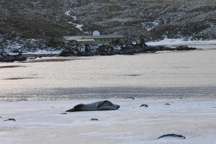 Leopard seal on the beach