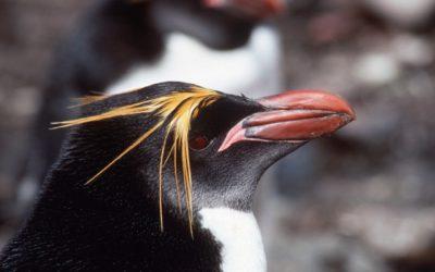 A close up of a bird.