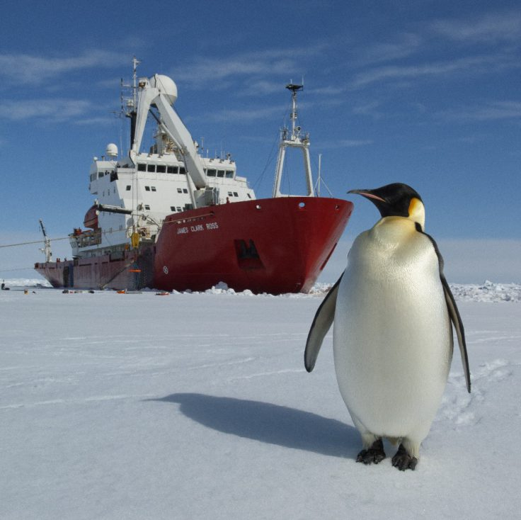 Emperor Penguins on the sea ice in front of RRS James Clark Ross. Taken during the JR240 ICEBell Cruise in the Weddell Sea