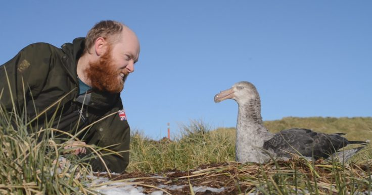 Alastair Wilson chats to a giant petrel friend – needs must and all that when conversation with human friends dries up! (Alastair Wilson)