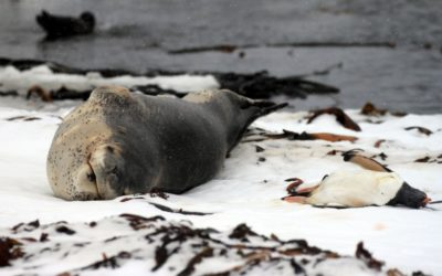A seal lying in the sand on a beach.