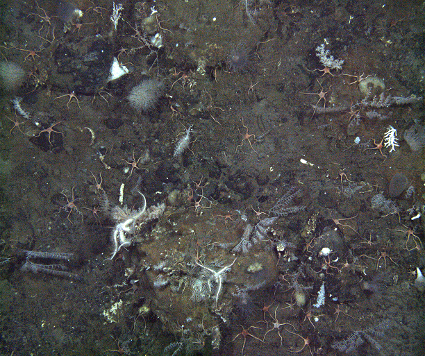 Coral on the sea floor