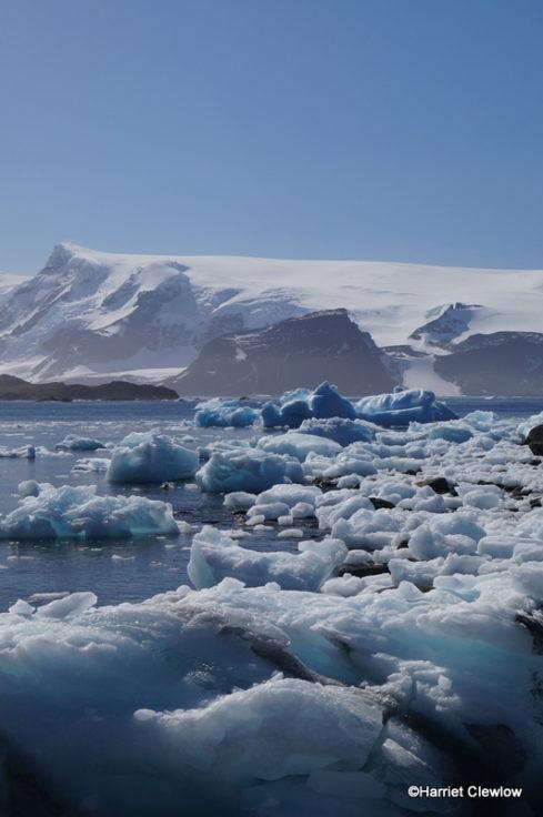 Where ice meets sea at Signy Island