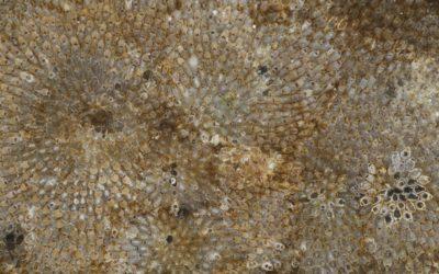 Bryozoans2