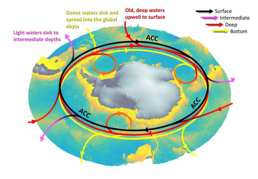 Overturning circulation in the Southern Ocean.
