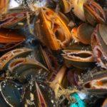 mussels_Tom_Wilding - Copy