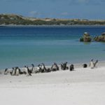 A flock of birds standing on top of a sandy beach.