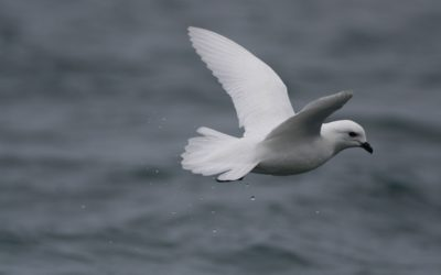 A bird flying over a body of water.