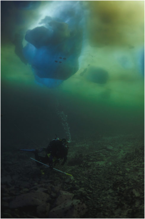 A diver investigates the seafloor in Ryder Bay near Rothera station, Antarctic Peninsula. An iceberg can be seen overhead.