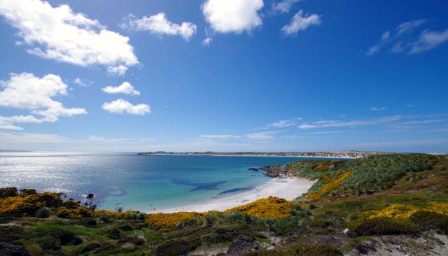 Gypsy Cove, Falkland Islands