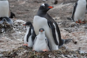 A flock of birds sitting on top of a penguin.