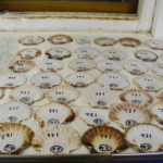 A table with scallop shells on it
