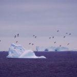 Petrels and icebergs at Signy Island