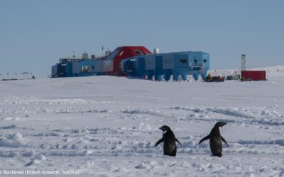 Penguins in a snowy landsscape in front of a research station