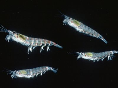 A close up of small marine creatures