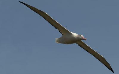 Flying wanderer