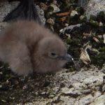 A bird sitting on a rock.