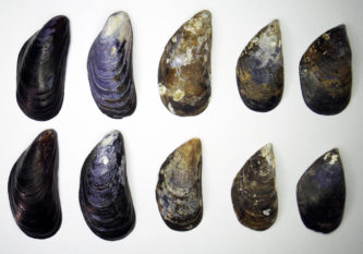 A bunch of different kinds of shells