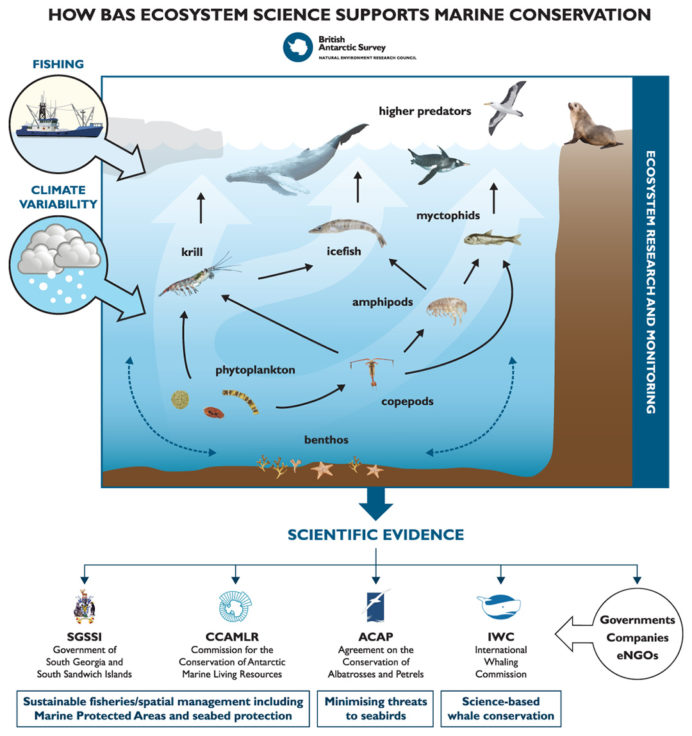 Ecosystem conservation illustration