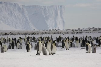 A group of people posing for Penguins