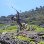 A bird standing on a rocky hill.