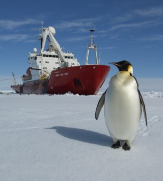 A penguin on the ice in front of the James Clark Ross research ship