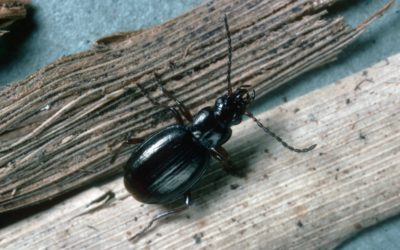 A insect on a wooden surface