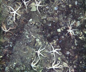 Benthic community