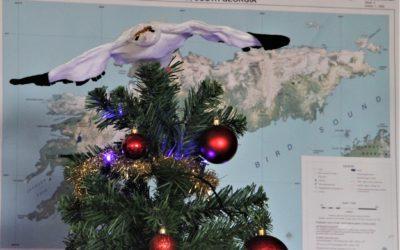 Christmas tree at Bird Island