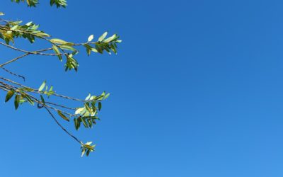 A group of branches on a sunny day