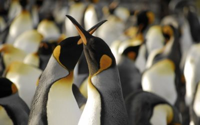 A close up of a penguin